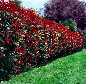 Taille de haie espace vert tonte de pelouse elagage for Forfait tonte pelouse